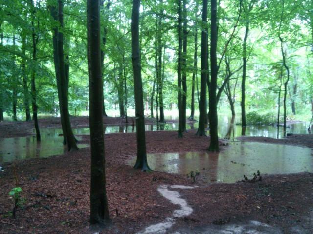 Unser Wald Ueberschwemmung-640x479 in Extremes Klima, extreme Ignoranz in den Nachrichten